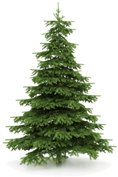 you have christmas tree that needs picked 11710