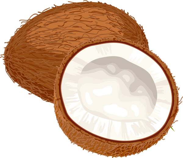 coconut clipart cartoon picture #8783