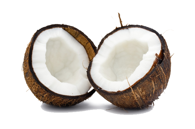 coconut images download clipart #8774