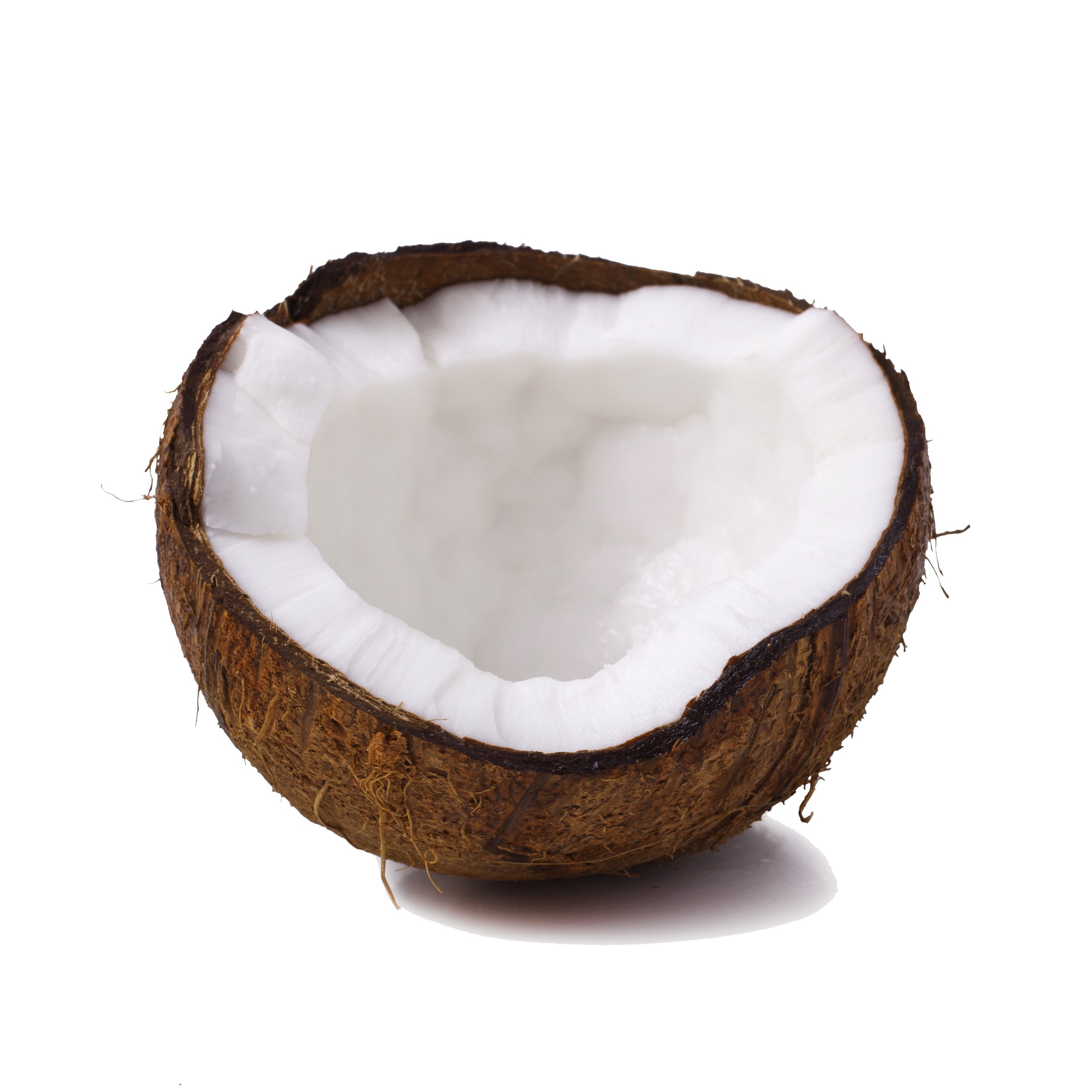 coconut transparent images only #8775