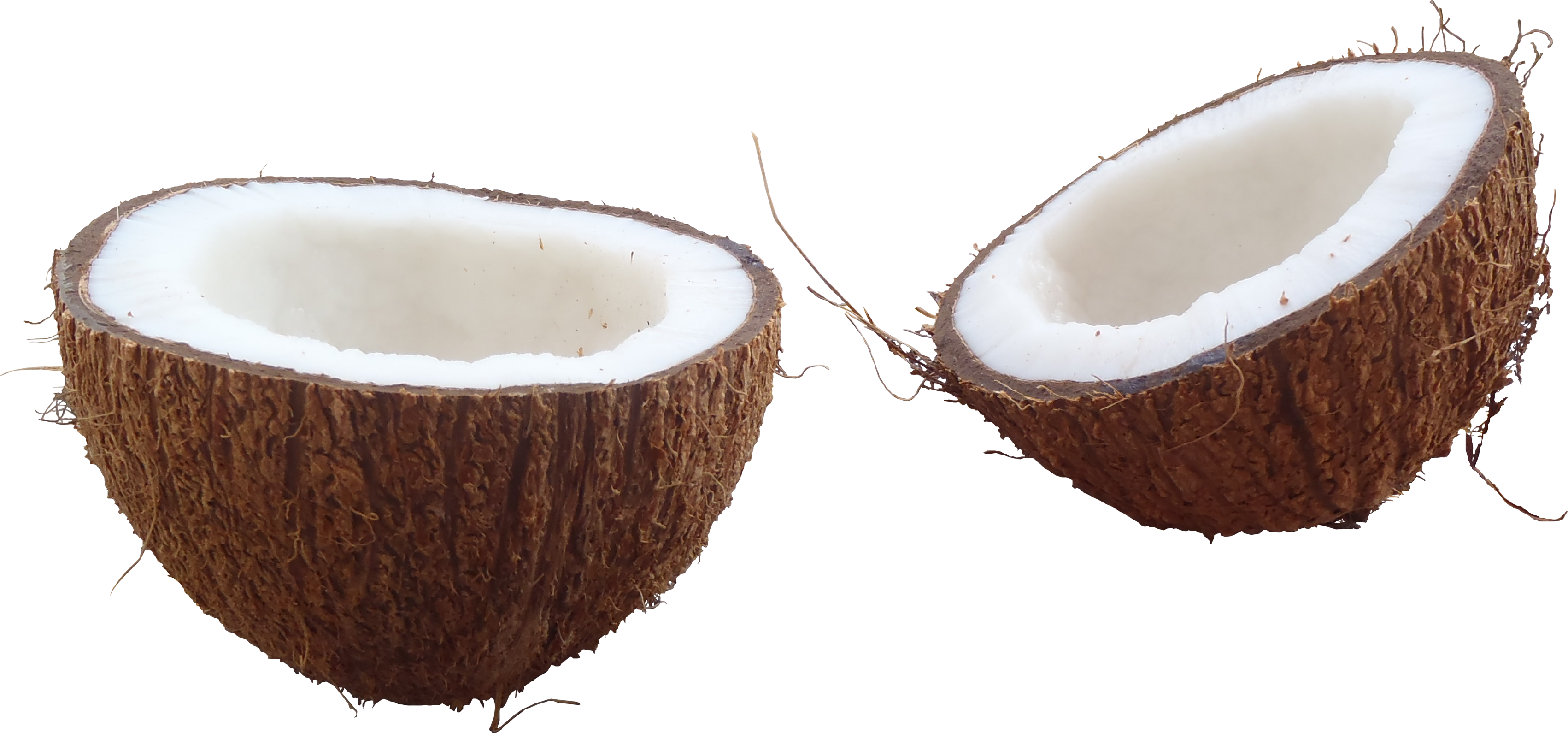 download coconut image pngimg #8776