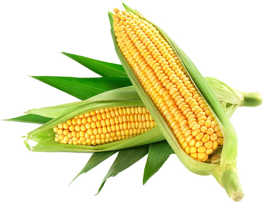 Corn PNG Clipart - Best WEB Clipart
