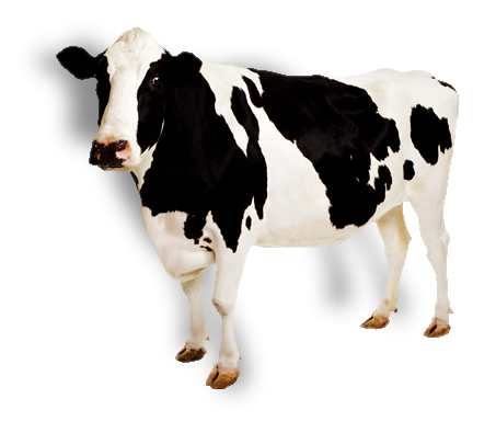 cow png images #12893