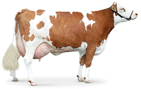 download brown cow png image png image pngimg #12886