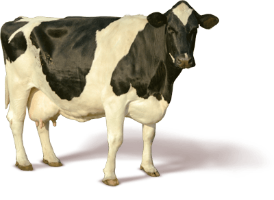 download cow png image png image pngimg #12846