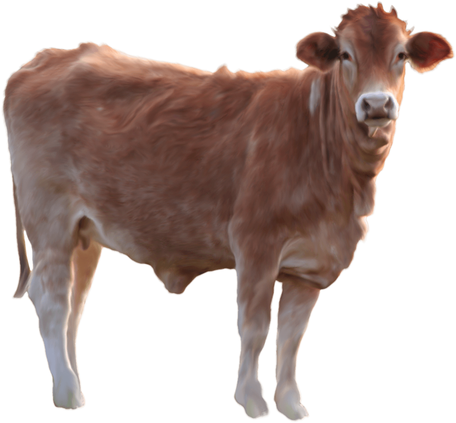 download cow png image png image pngimg #12745
