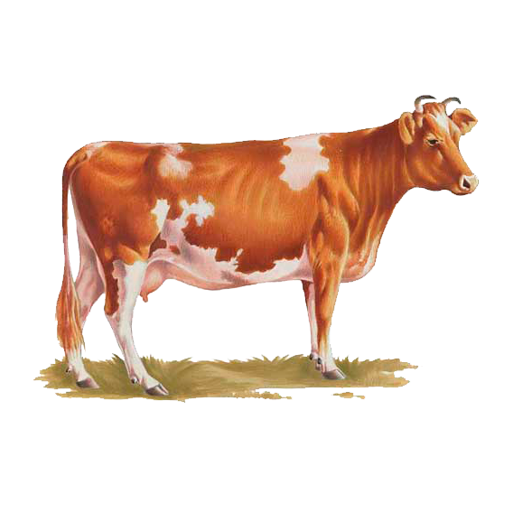 indian cow images png all about cow photos #12883