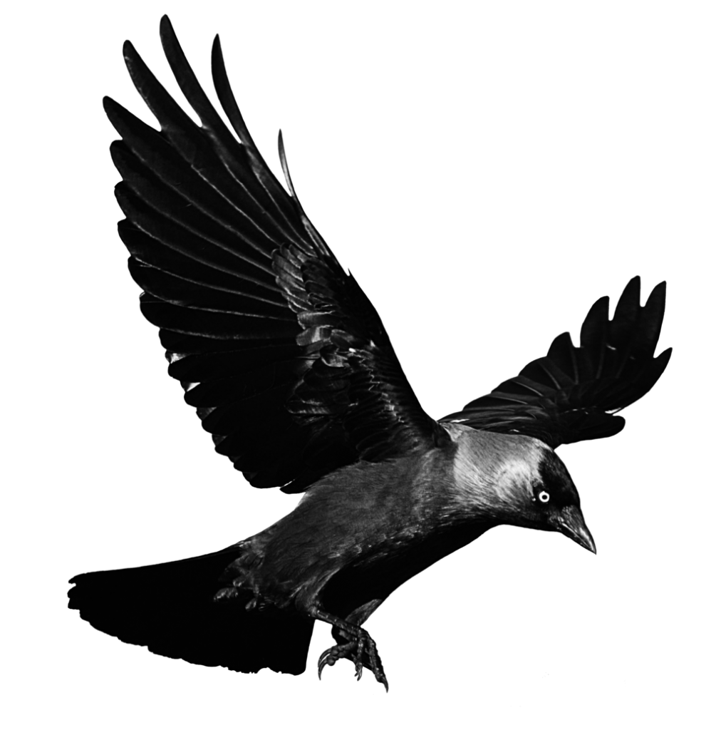 crow png images with transparent backgrounds photos #26947