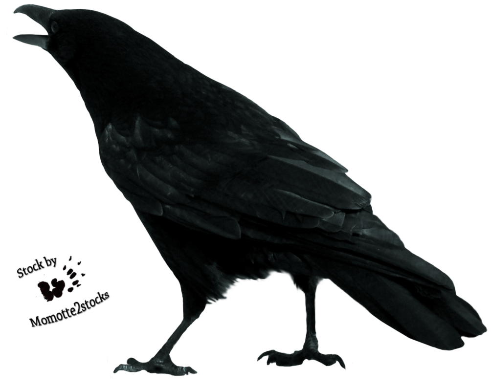 crow png images with transparent backgrounds photos #26996