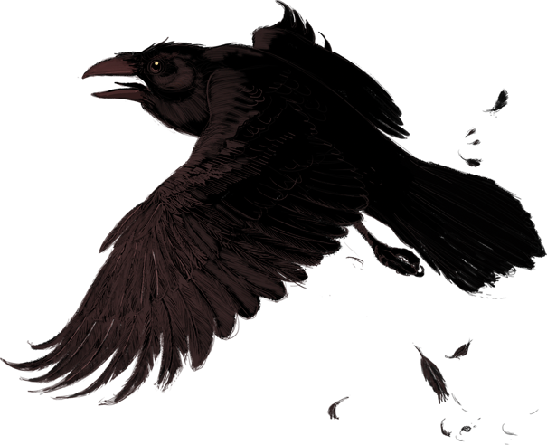 crow png images with transparent backgrounds photos #26954