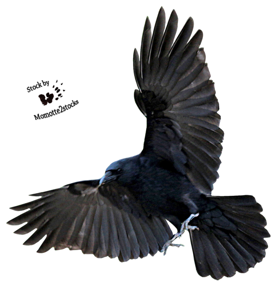 cut out png majestic crow momotte #27000