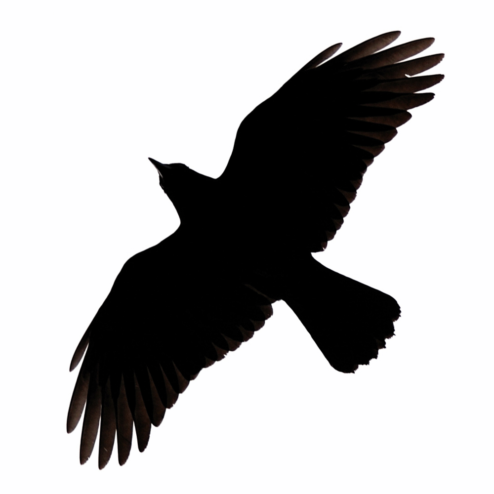 crow silhouette clipart best #27625