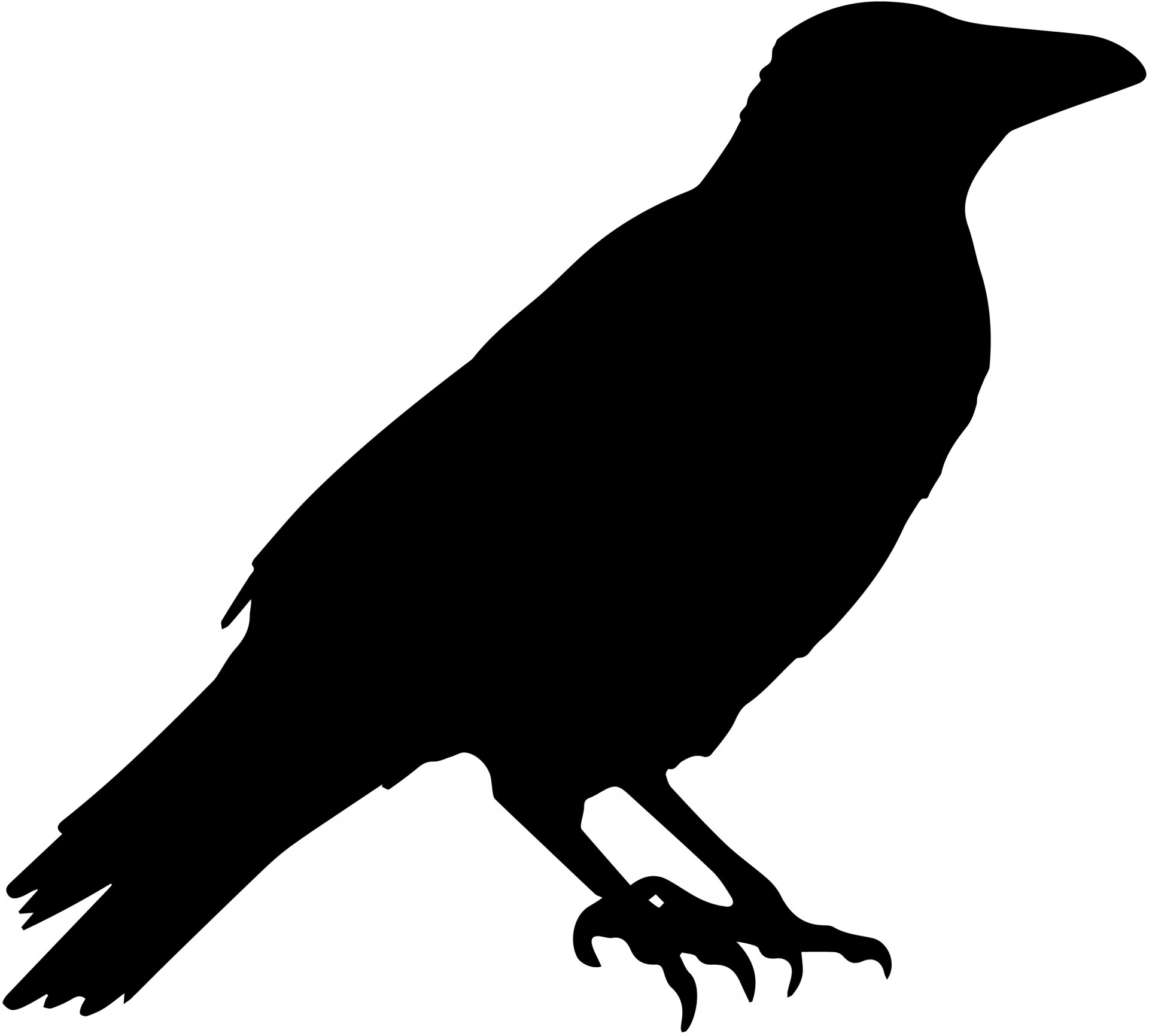 crow silhouette, crow vector silhouette photo domain #27600
