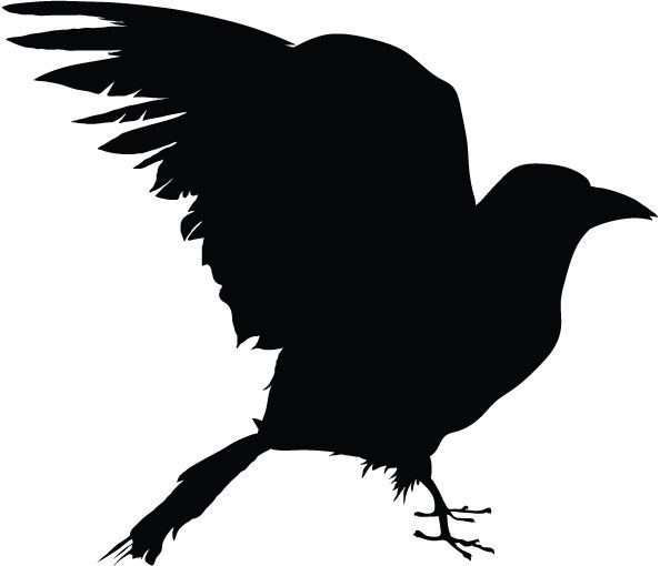 crow silhouette vinyl decal sticker raven crow birds ebay #27621