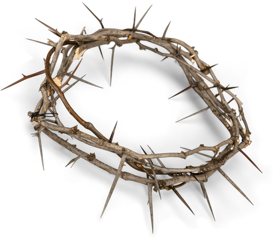 crown of thorns crown thorns download clip art with transparent #36032