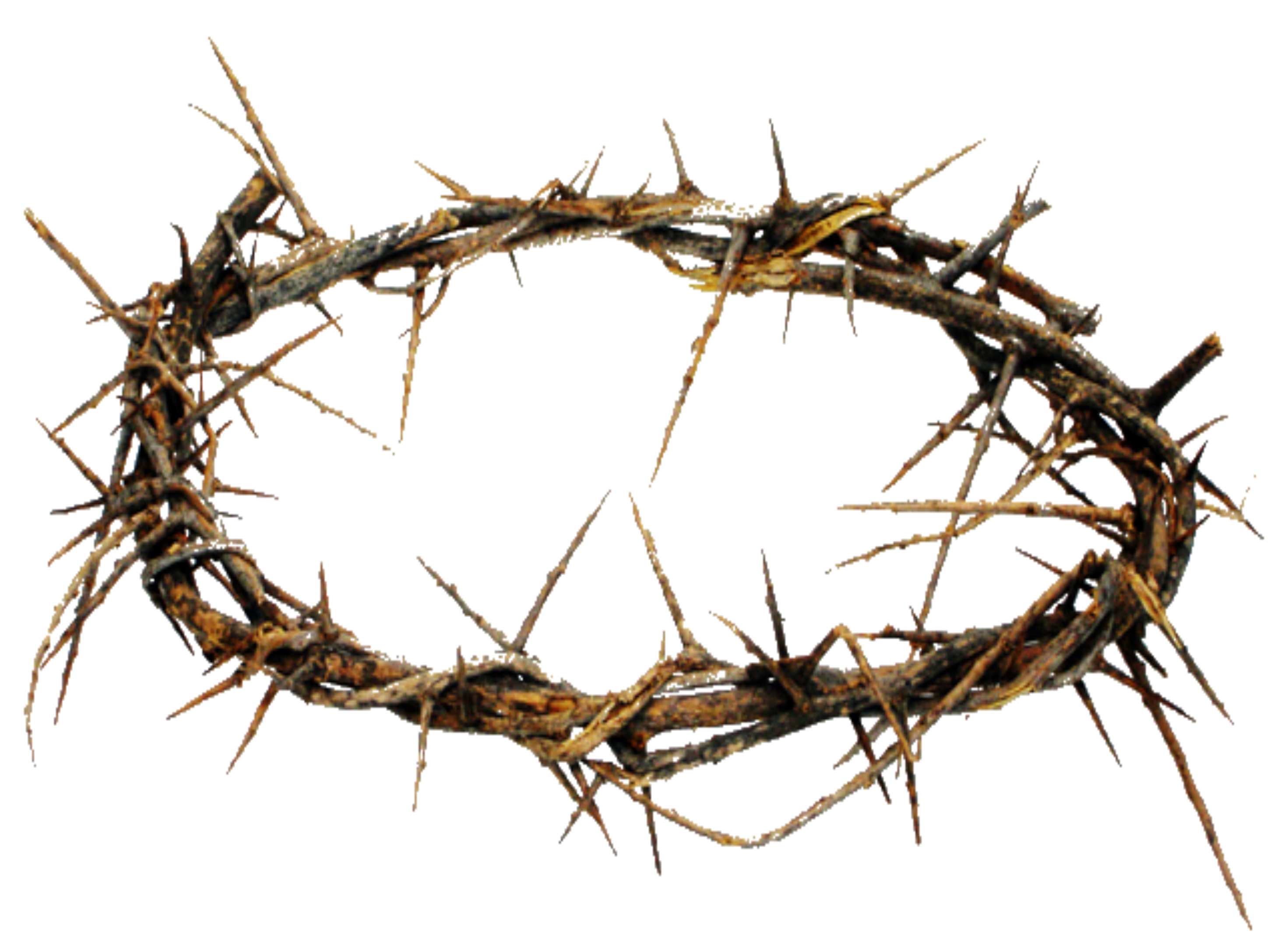 crown of thorns crown thorns image png png files clip #36033