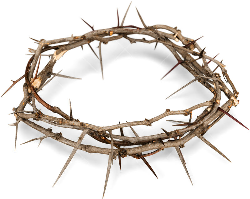 crown of thorns crown thorns png clipart #36050
