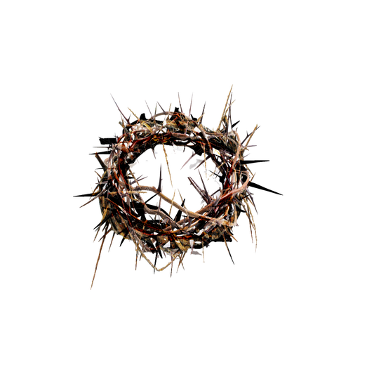 crown of thorns happened upon crown thorns chariot #36039