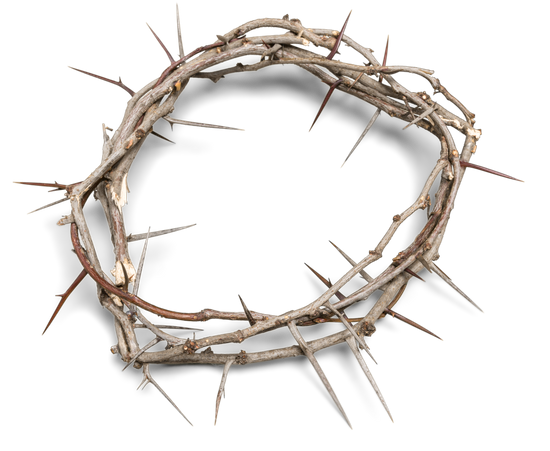 crown of thorns premium photos canva #36035