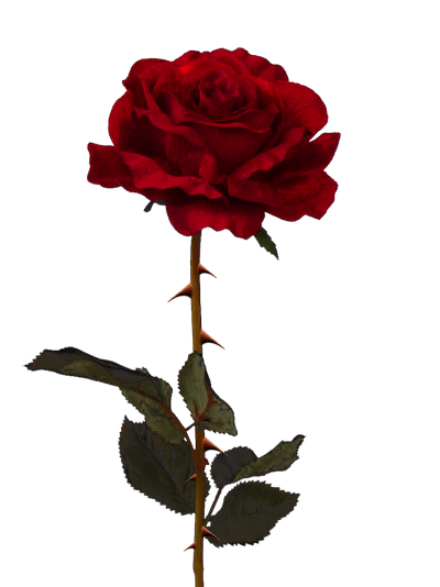 rose thorns rose png pixasso #36090