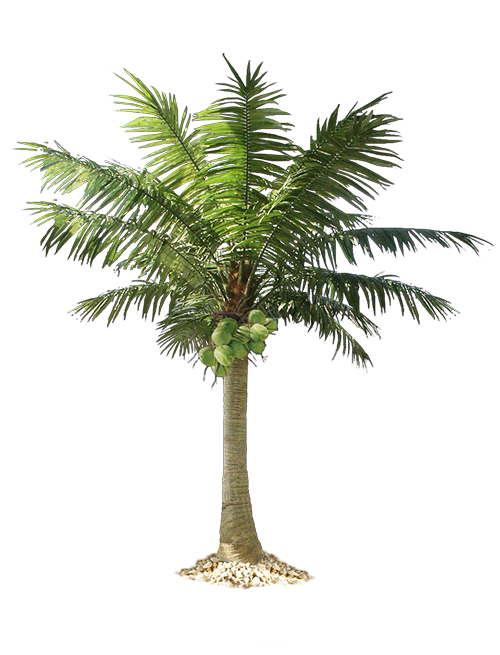 date palm, artificial palm tree and cocotree like real palm tree #32190