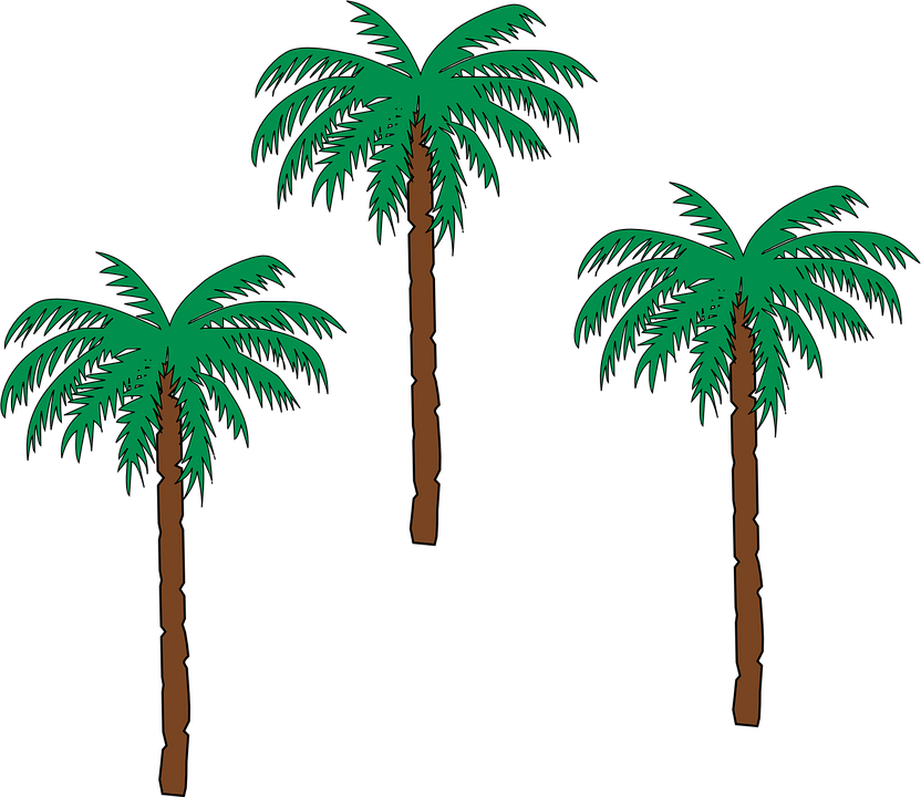vector graphic palm trees date palm botany #32191