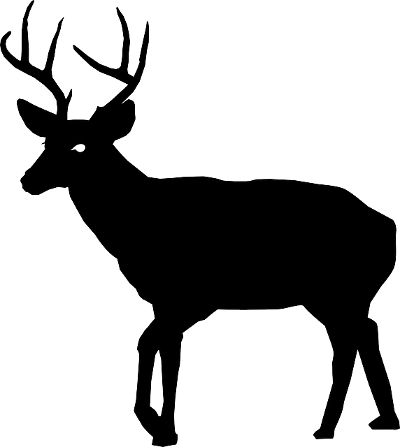 animal buck deer vector graphic pixabay #22312