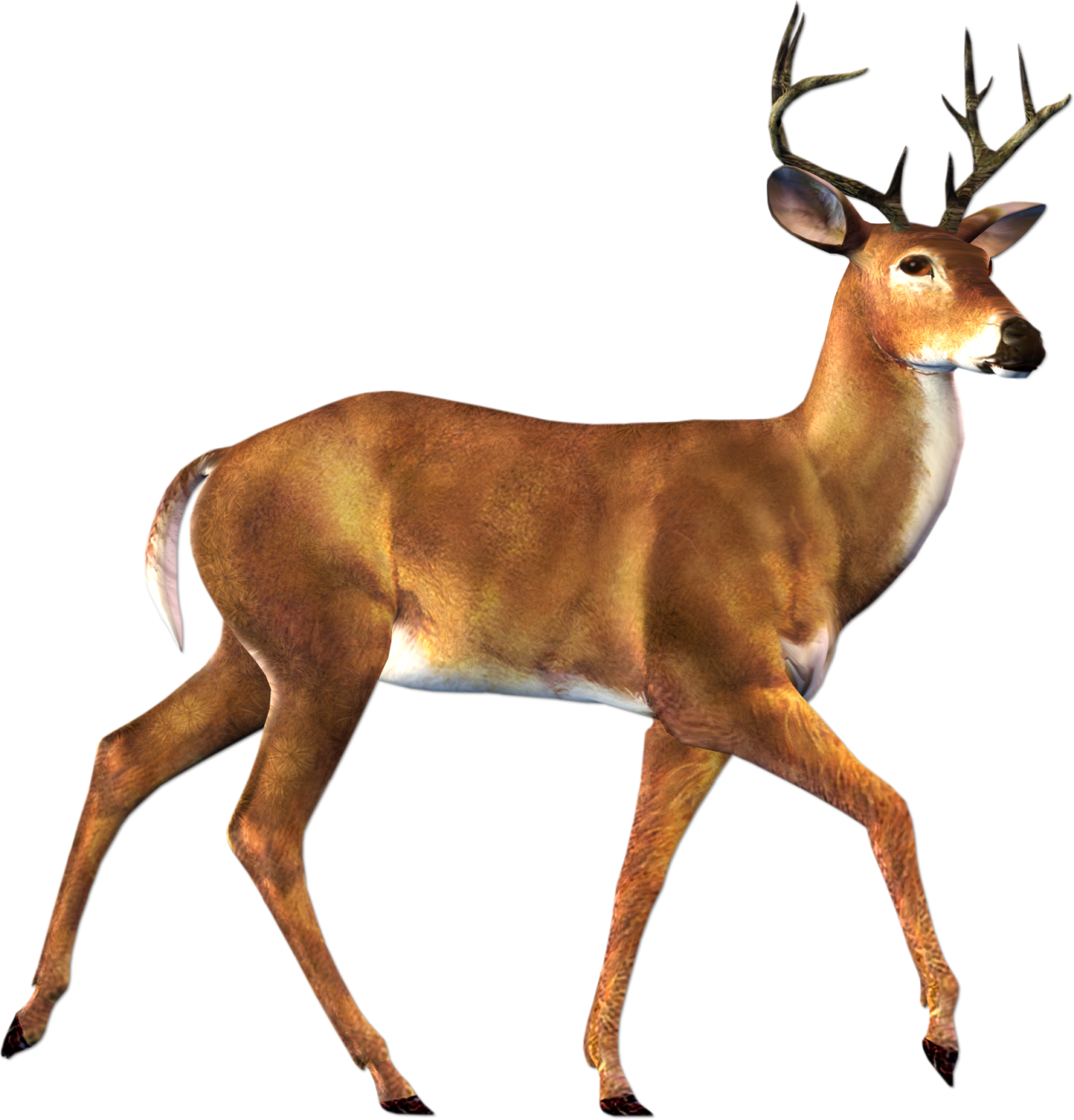 buck clipart cute deer pencil and color buck clipart #22294