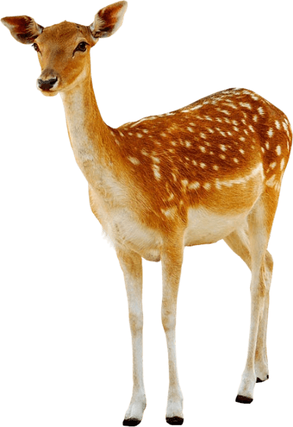 deer female transparent png stickpng #22326