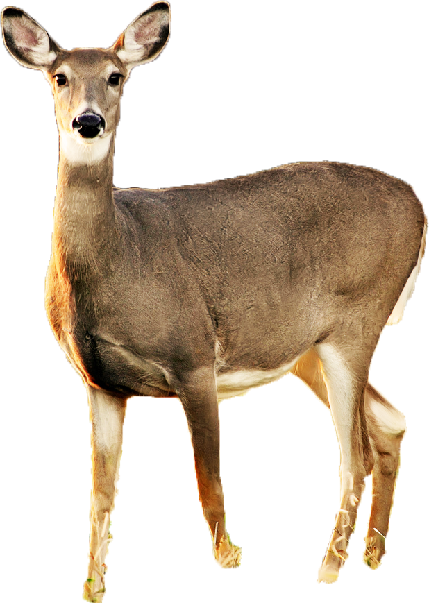 deer png images with transparent background #22297