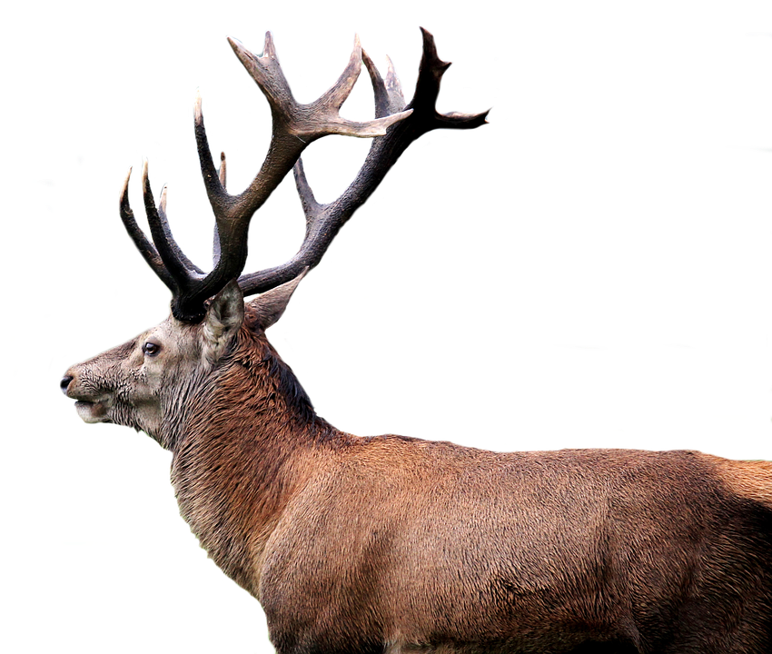 deer png images with transparent background #22311
