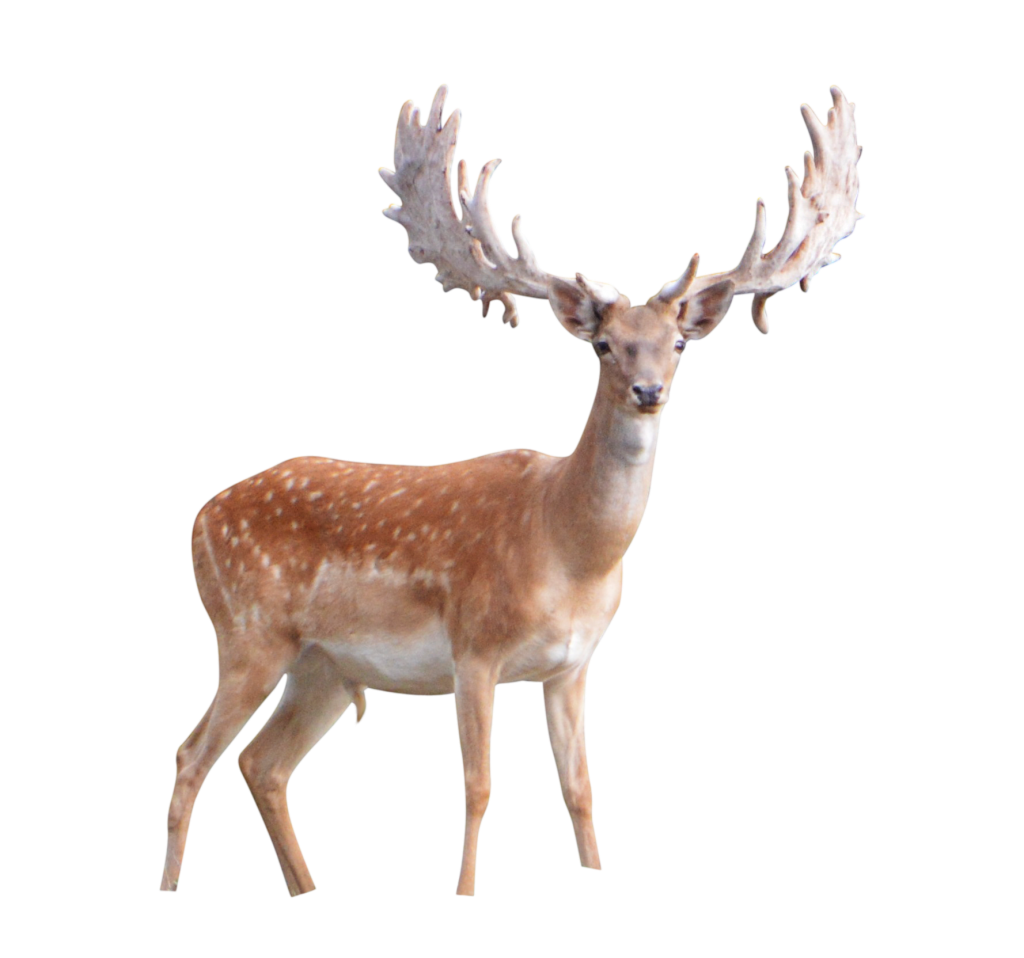 deer png images with transparent background #22313