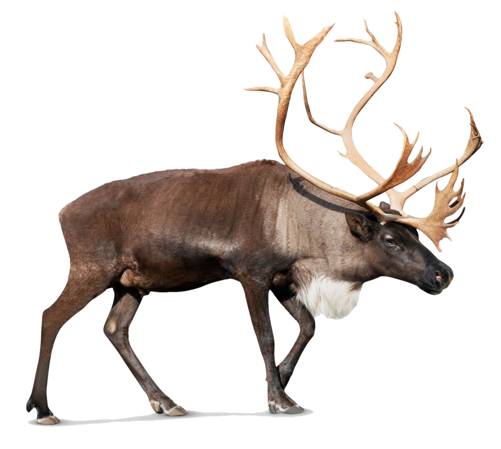deer png images with transparent background #22315