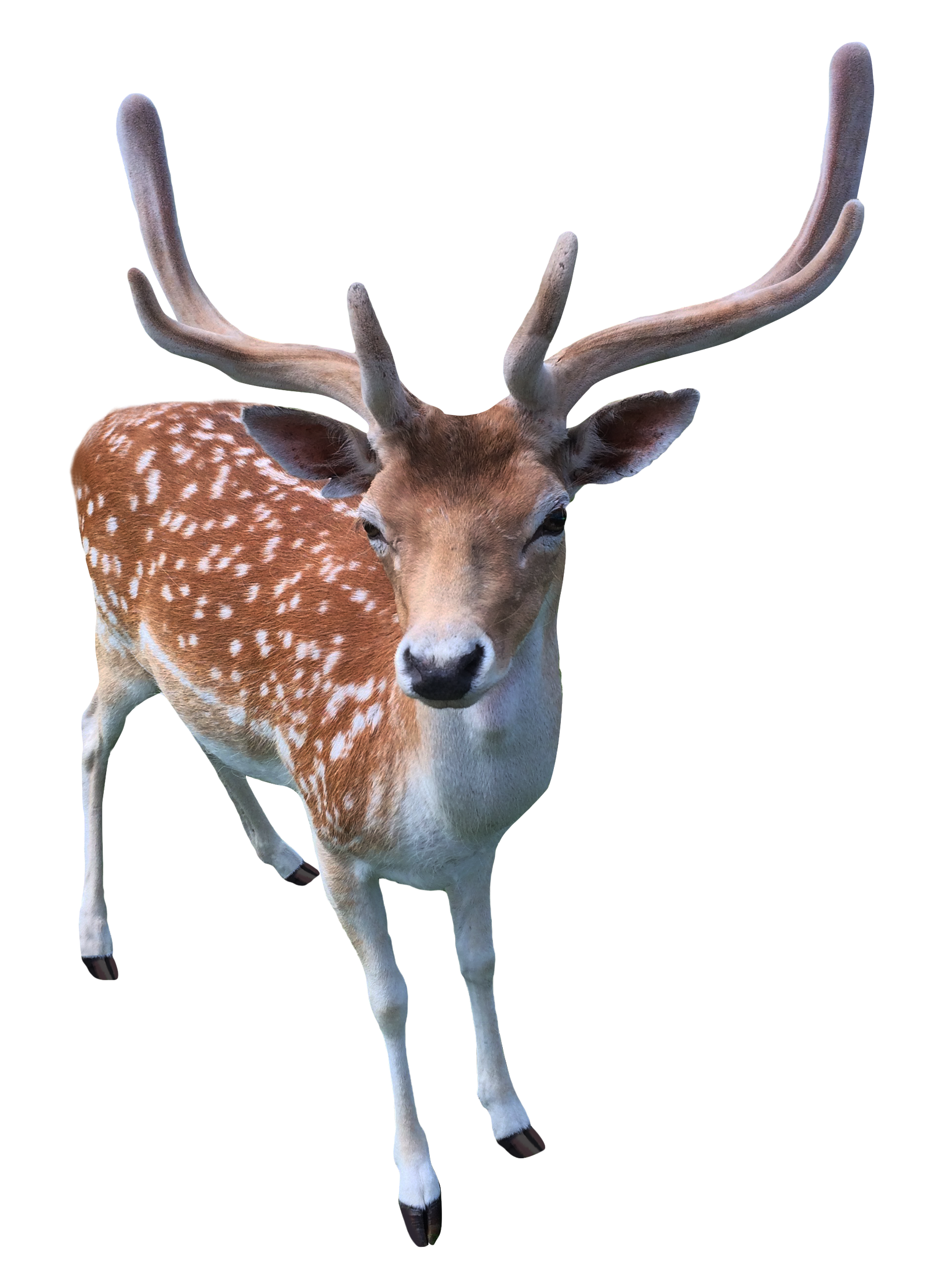 deer png transparent image pngpix #22291