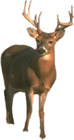 deer, tux paint stamp browser animals #22300