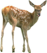 deer, tux paint stamp browser animals #22310