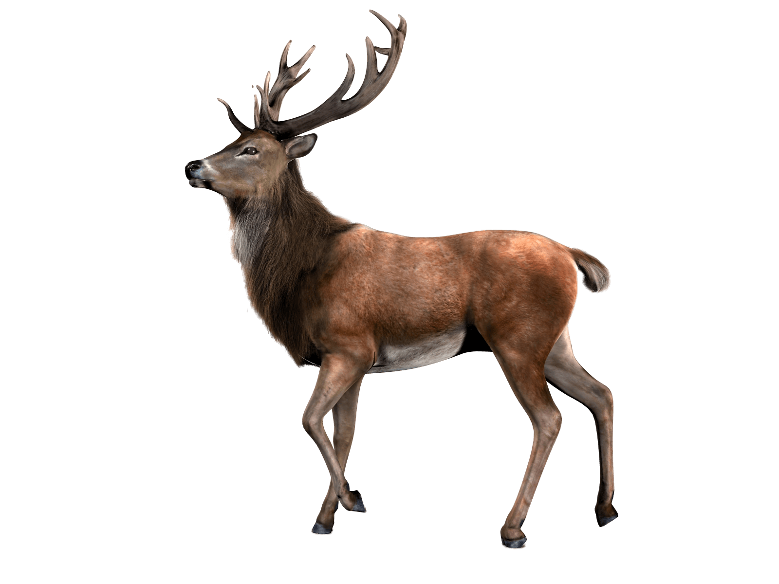 single deer transparent png stickpng #22295