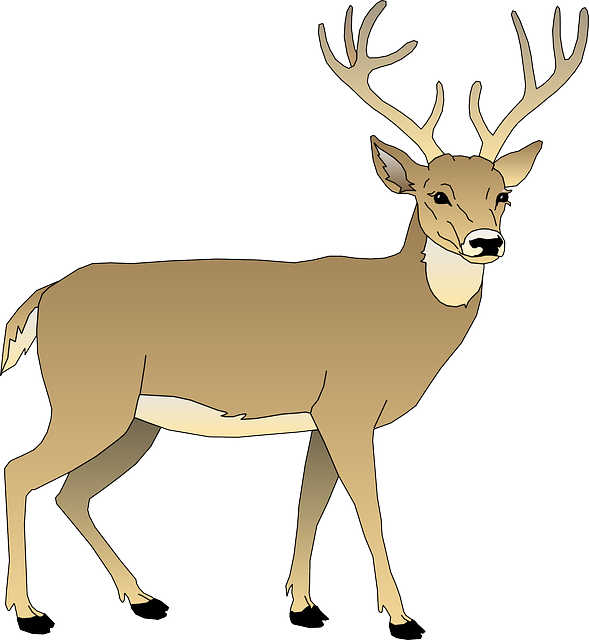 vector graphic deer male animal mammal antlers #22305