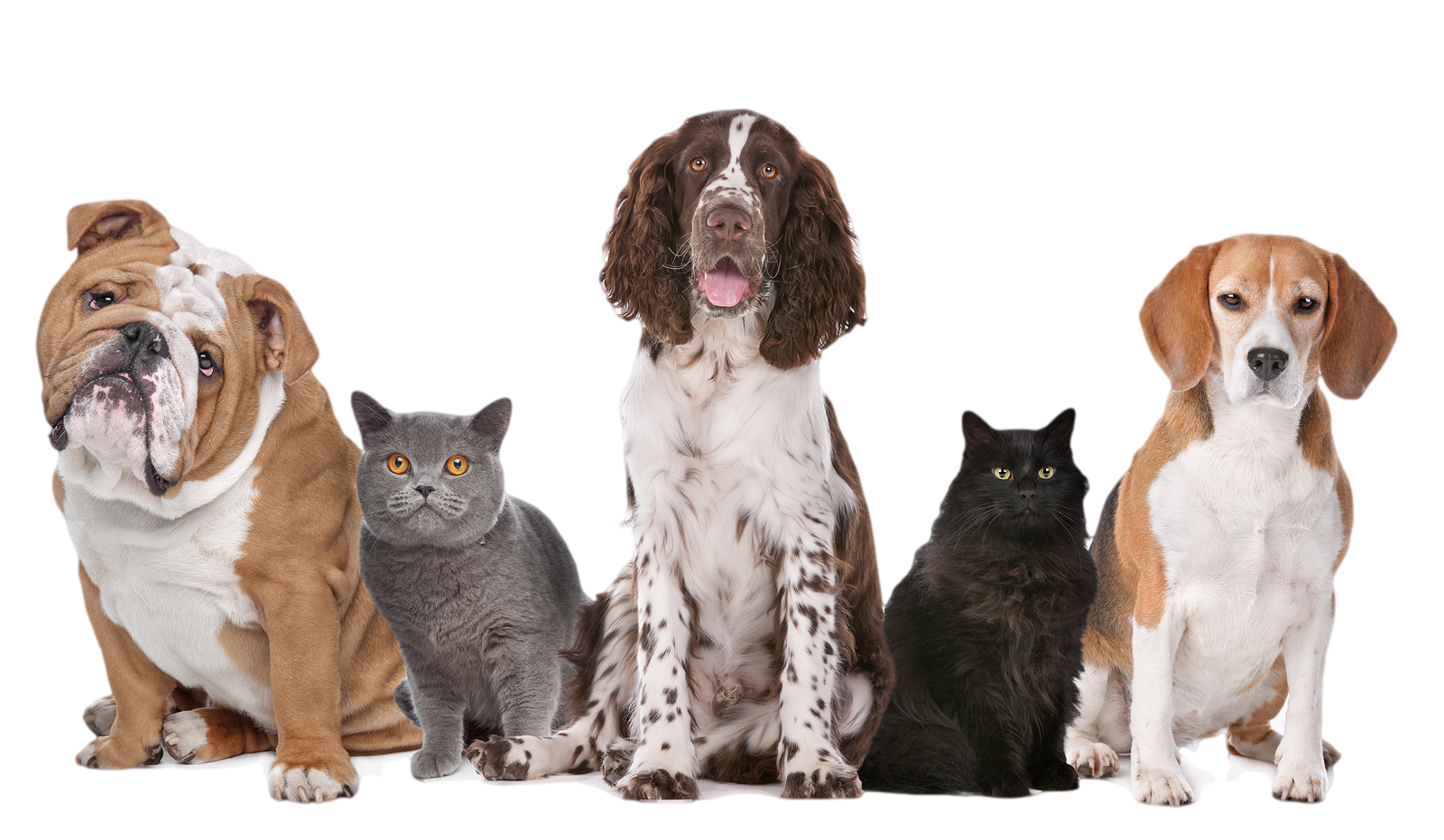 dog png cats and dogs png transparent cats and dogs #11426