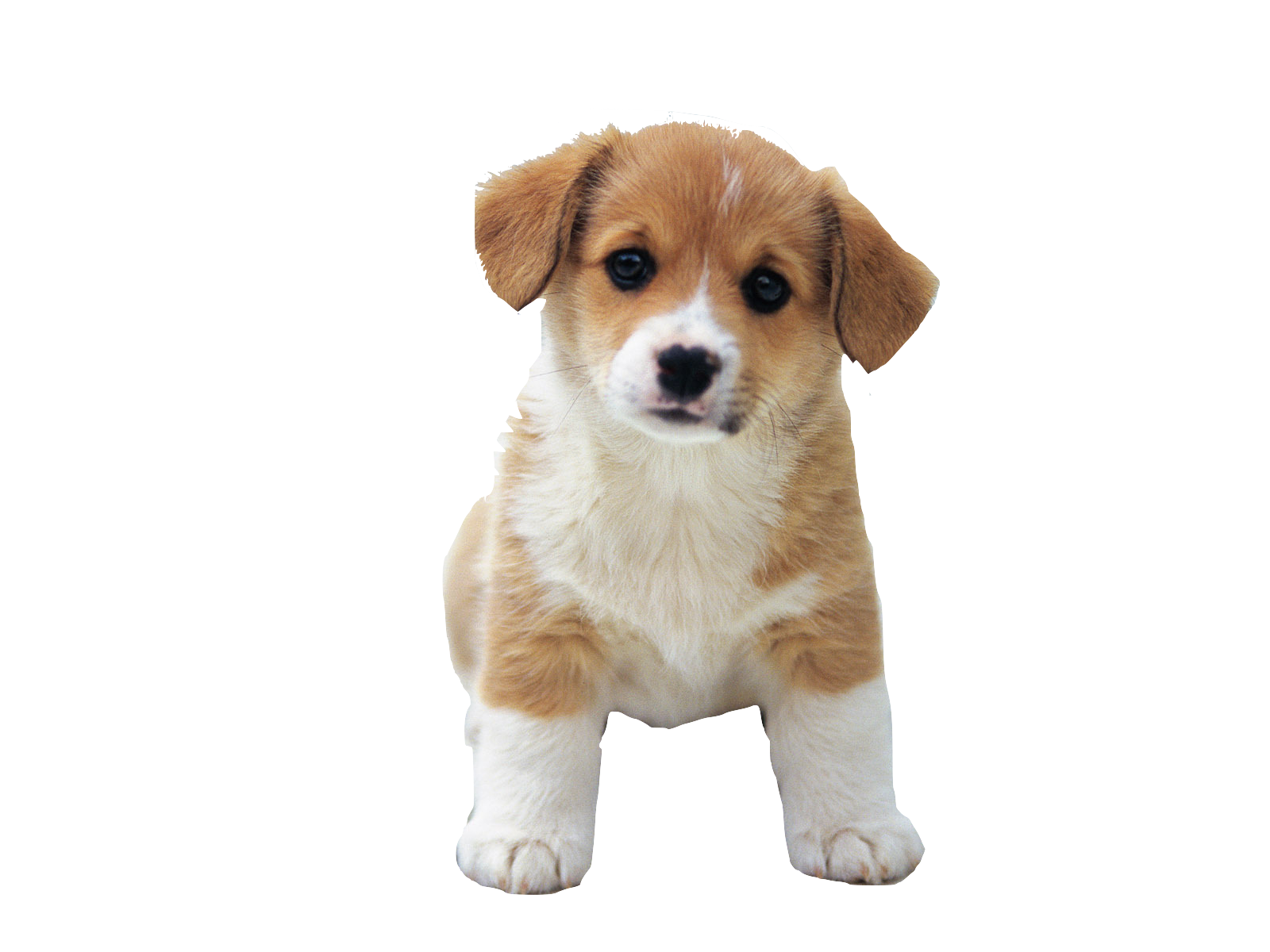 dog png cute puppies images clkerm vector clip #11311