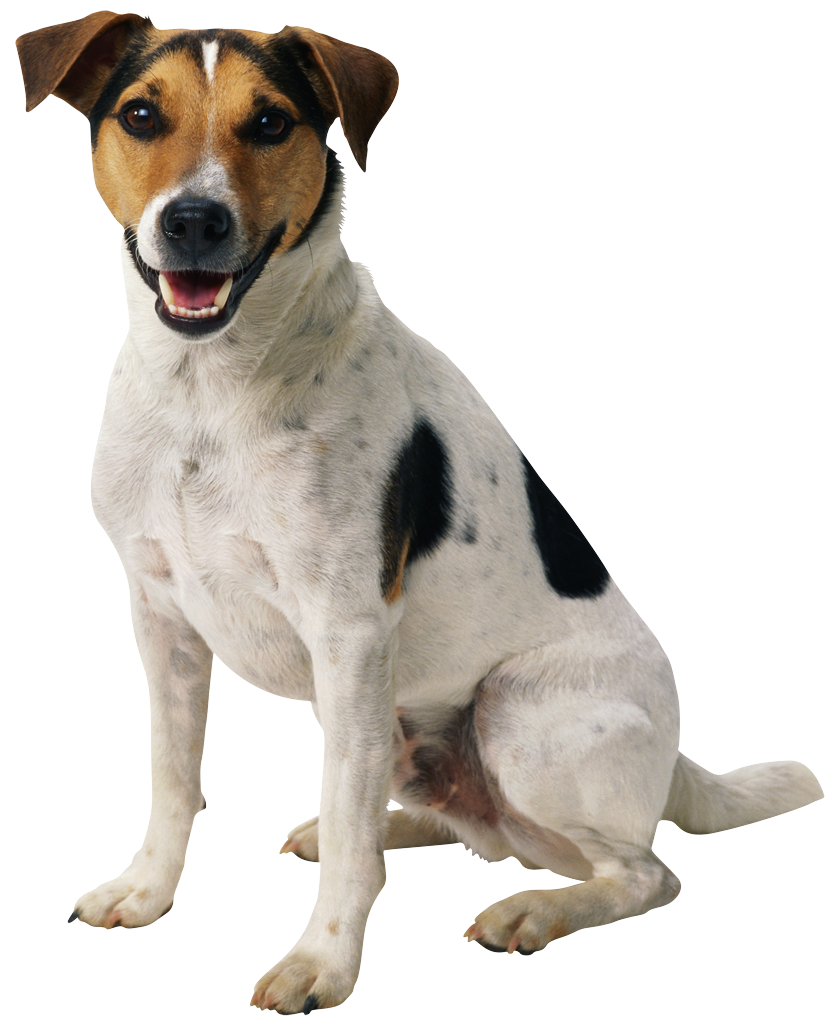 dog png happy puppy #11310