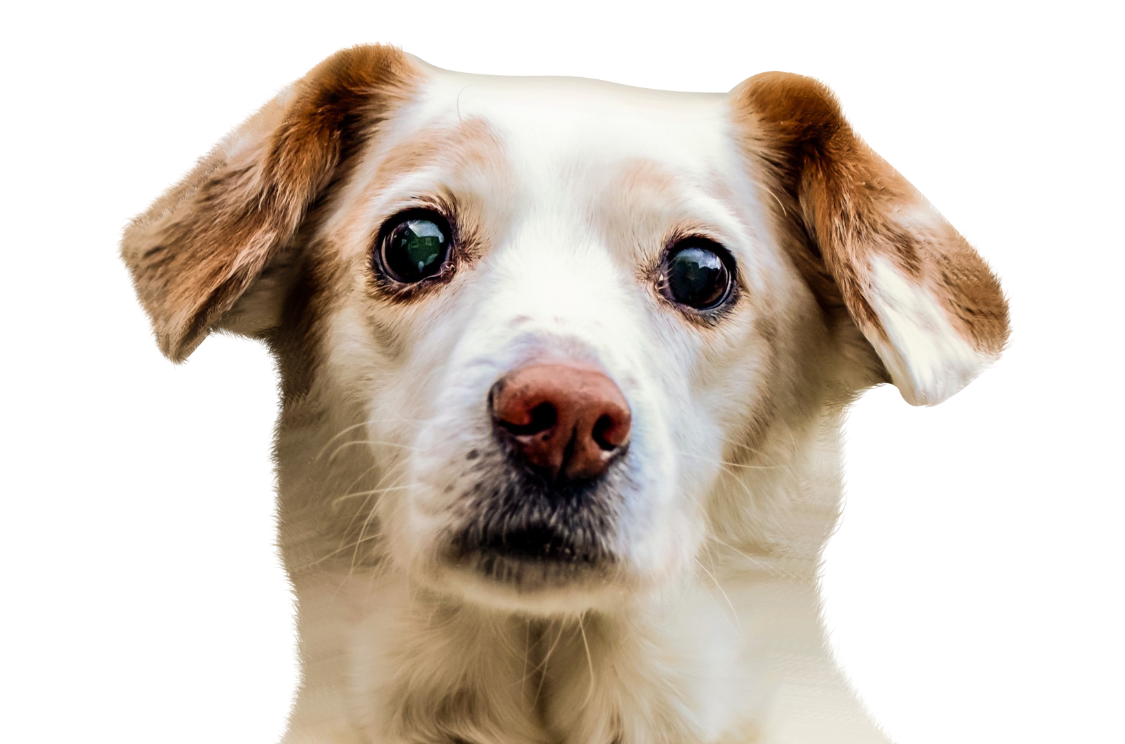 dog png images #11333