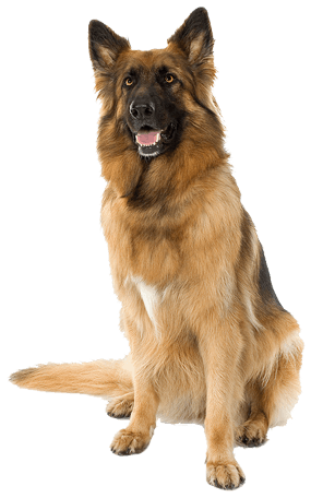 download dog png image picture download dogs png image #11422