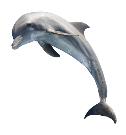 dolphin png image pngpix #22013