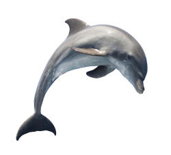 dolphin png images pngpix #22014