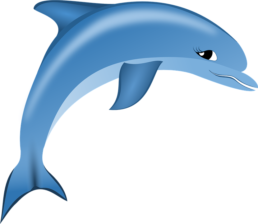 dolphin vector graphic pixabay #22027