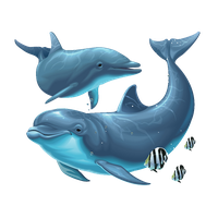 download dolphin png photo images and clipart #22012