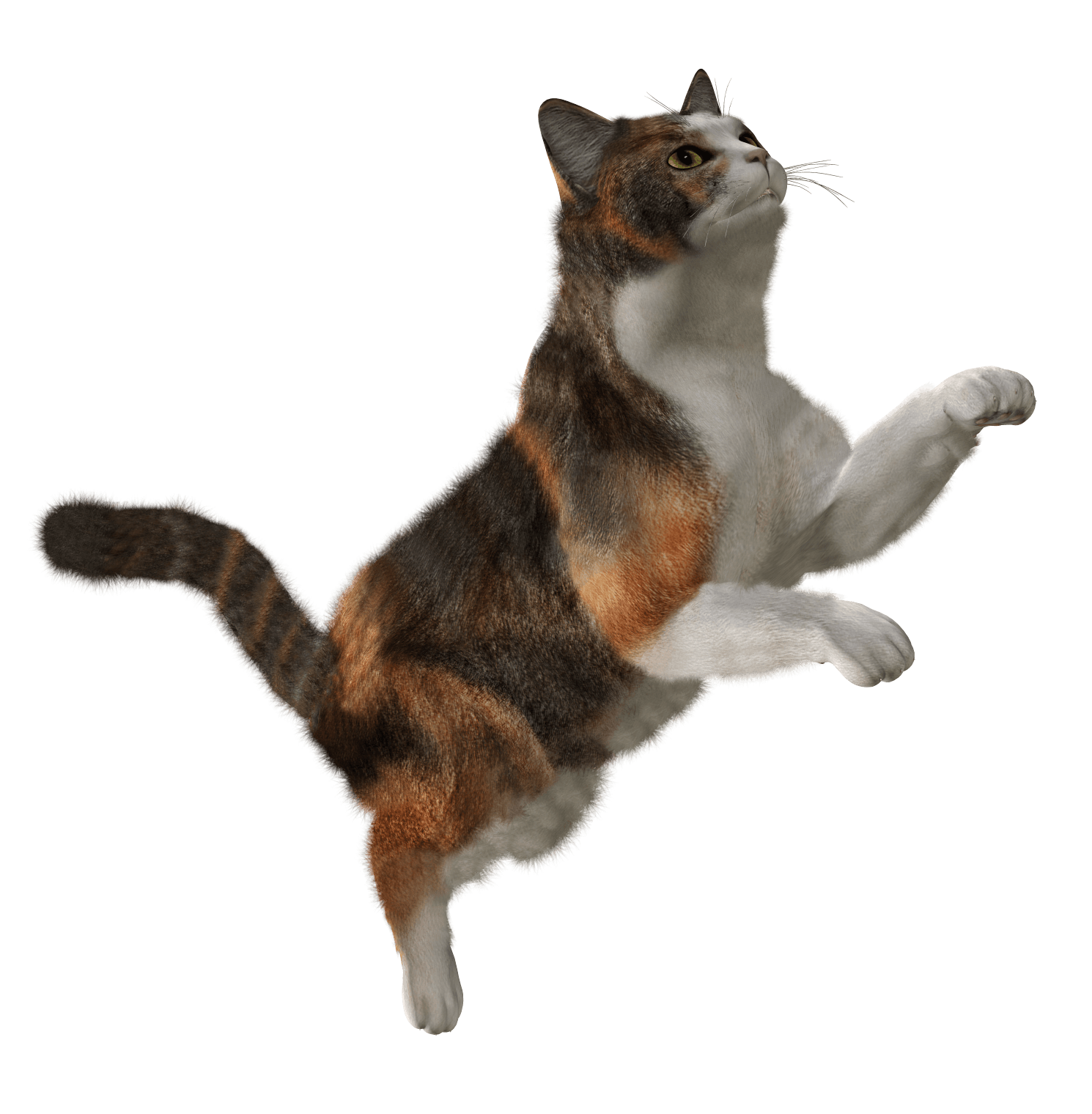 download cat png image download picture kitten png #31743