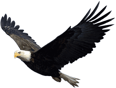 bald eagle png transparent images png only 15184