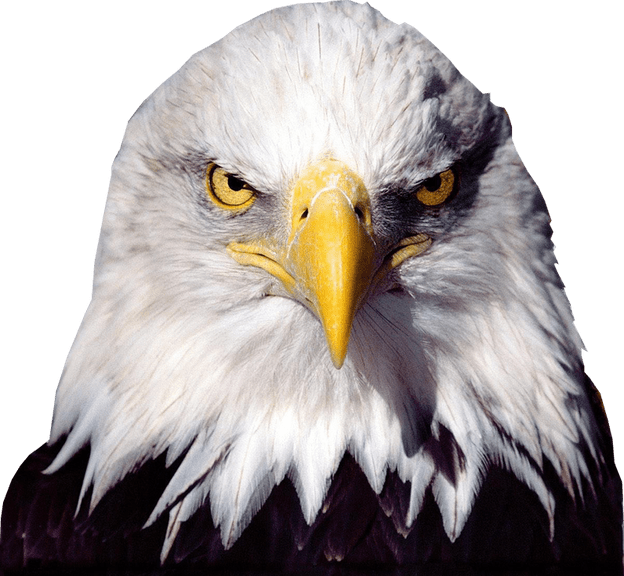 bald eagle transparent image bird graphic 15183